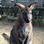 五月山動物園の動物たち