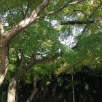 茨木の紅葉事情