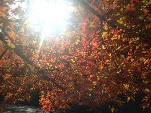 磐船神社の紅葉5