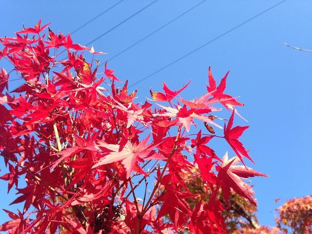 磐船神社の紅葉7