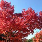 磐船神社周辺の紅葉