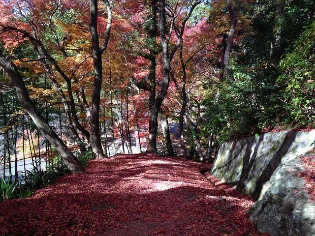 大門寺の紅葉3