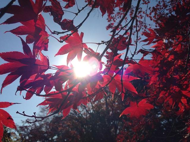 大門寺の紅葉11