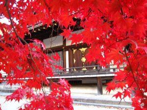 仁和寺の紅葉3