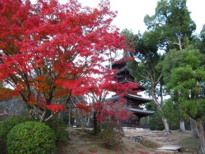 仁和寺の画像4